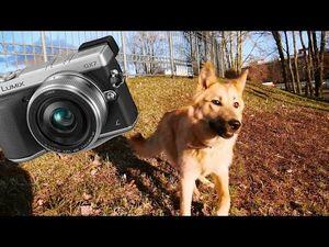 Обзор беззеркальной фотокамеры panasonic lumix dmc g6