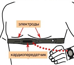 Пульс под контролем? чем и зачем измерять пульс в движении